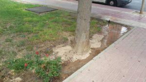 Zona jardin estropeado 2 (Plaza Open Futura)