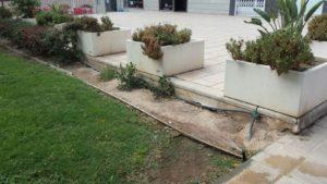 Zona jardin estropeado 1 (Plaza Open Futura)