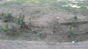 Zona jardín arreglado 4 (Plaza Open Futura)
