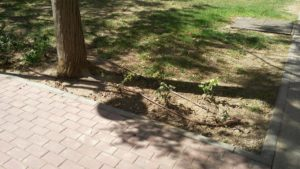 Zona jardin arreglado 2 (Plaza Open Futura)