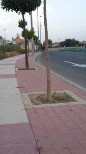 2017-08-01 Alcorques avenida Joven Futura limpios