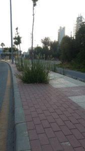 2018-08-03 Alcorques Avenida Joven Futura sin limpiar