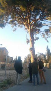 Visita Torre Falcón y pino centenario en Joven Futura por José Guillén