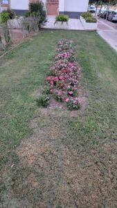 2019-08-05 Reposición flores en plantación familias en Joven Futura