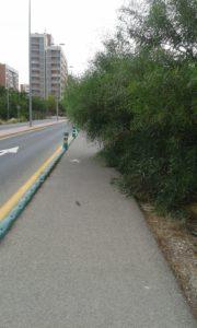2019-08-05 Arbolado que impide el paso por zona peatonal Avenida Joven Futura