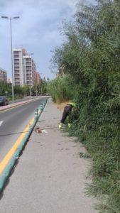 2019-08-07 Poda del arbolado que impedía el paso por zona peatonal Avenida Joven Futura