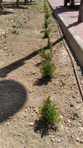 2020-06-12 Reposición arbustos jardín ocupa - Joven Futura