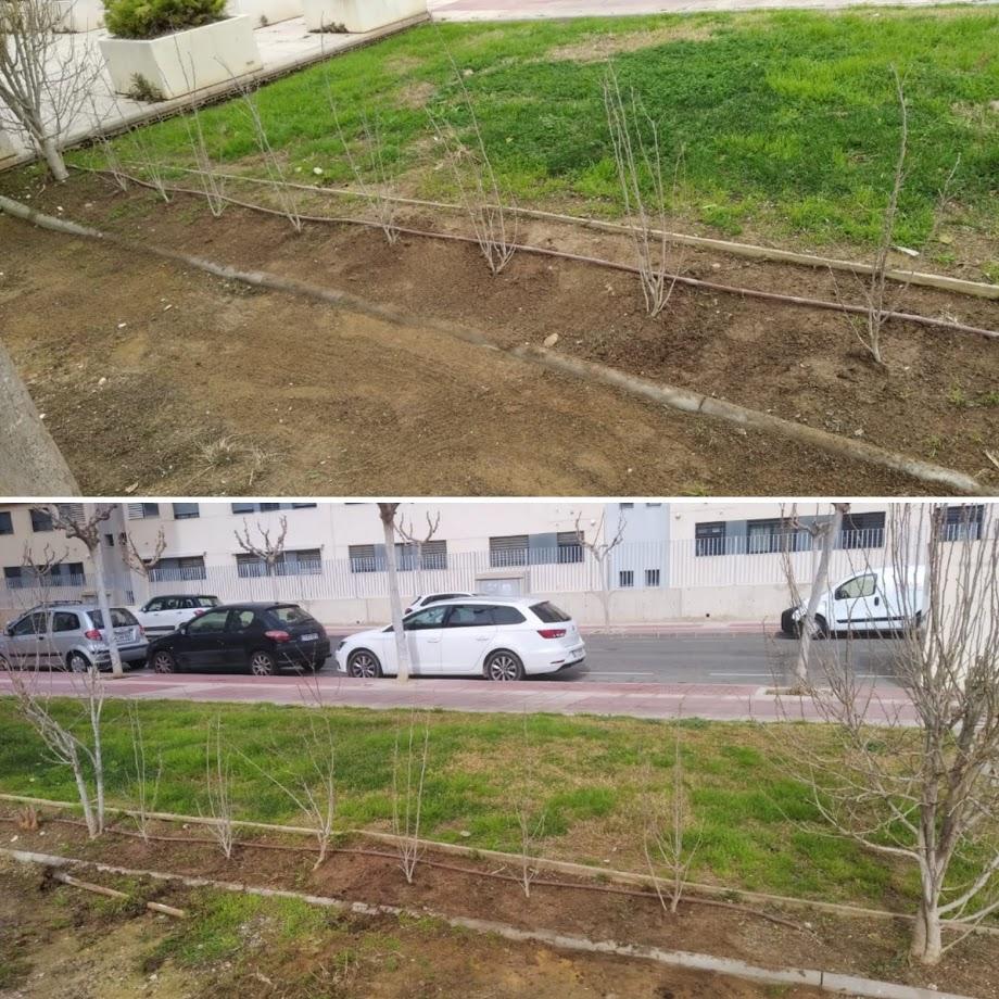 2021-02-21 Reposición de hibiscus jardín junto a Guardería Futurines en Joven Futura
