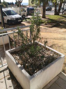 2021-01-25 Reposición de plantas en maceteros y arbustos en jardines de Joven Futura