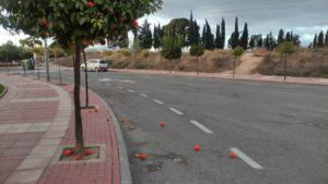 2021-02-08 Naranjas por el suelo de Joven Futura