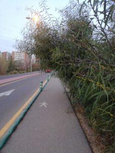 Plantas que invaden el acceso peatonal a Joven Futura