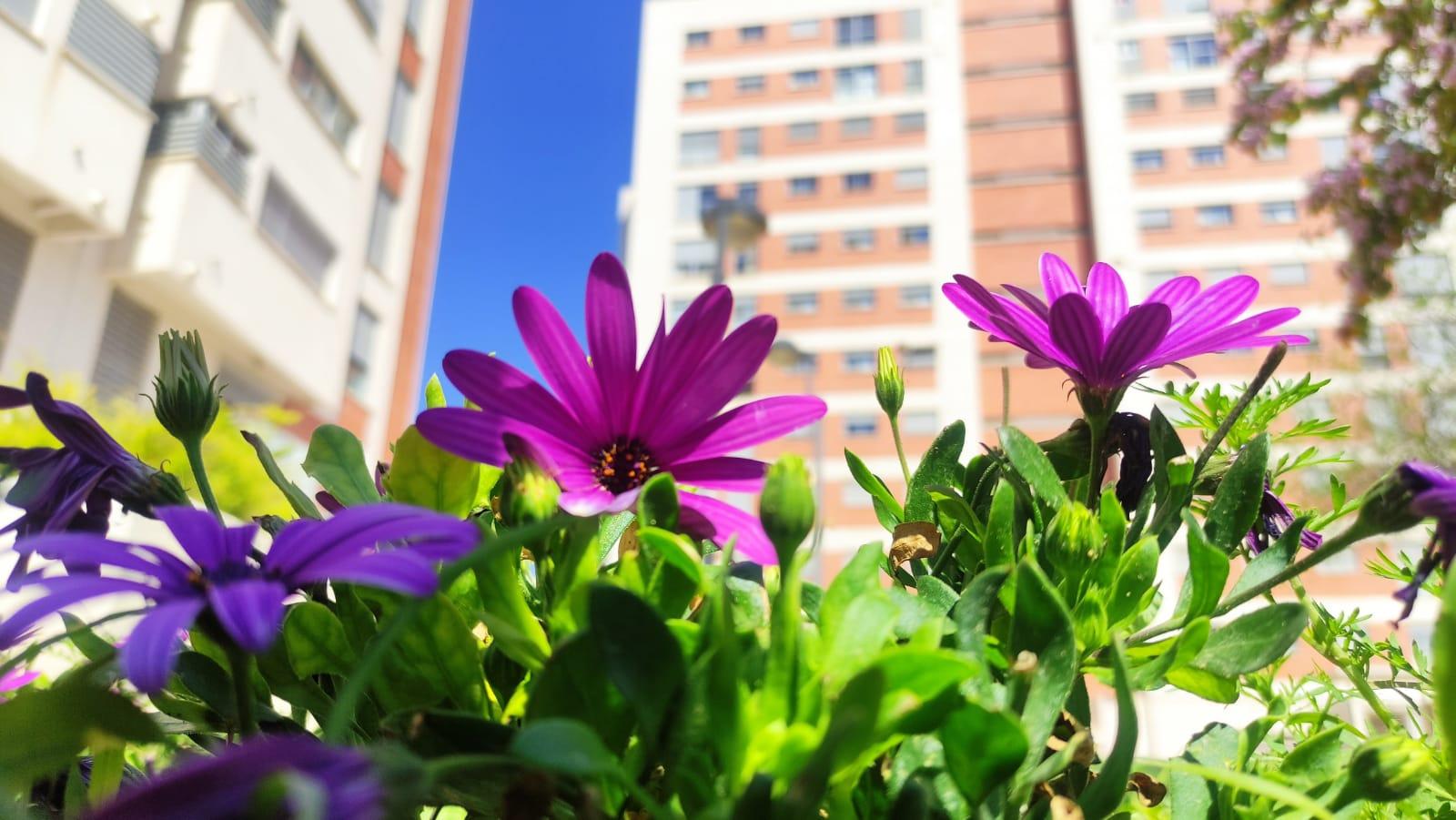 2021-04-11 Flores junto Rayuela en los jardines de Joven Futura